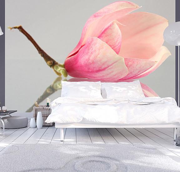 Фототапет - A lonely magnolia flower, Фототапети, Цветя
