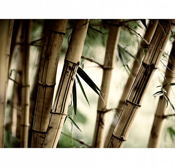 Фототапет - Fog and bamboo forest, Фототапети
