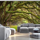 Фототапет - Tree embrace, Фототапети, Пейзажи