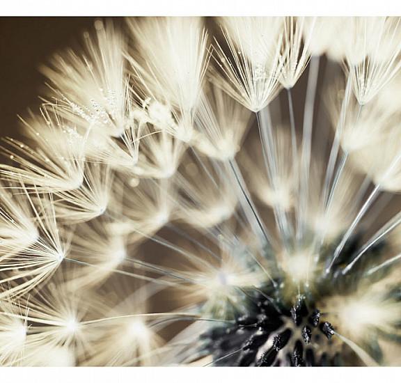 Фототапет - Beautiful Summer Morning, Фототапети, Цветя