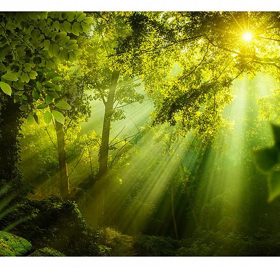 Фототапет -  In a Secret Forest, Фототапети, Пейзажи