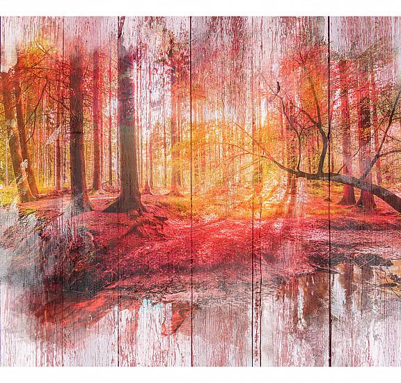Фототапет - Autumnal Forest, Фототапети, Пейзажи