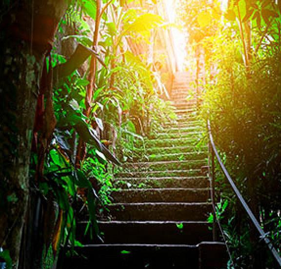 Фототапет за врата - Photo wallpaper - Stairs in the urban jungle I, Фототапети за врата