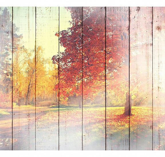 Фототапет - Autumn Sun, Фототапети, Пейзажи