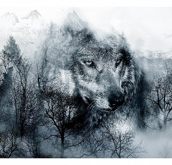 Фототапет - Mountain Predator (Black and White), Фототапети, Фототапети